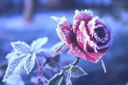 J'me ferais pousser des fleurs dans les cheveux, j'me ferais belle à t'en crever les yeux.