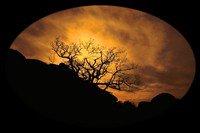 Dans ses nuits blanches, elle hurle en silence ... Dans ses jours noirs, elle pleure l'absence ...