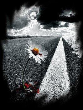 Ne crois pas que tu t'es trompé de route, quand tu n'es pas allé assez loin ... ( Claude Aveline )