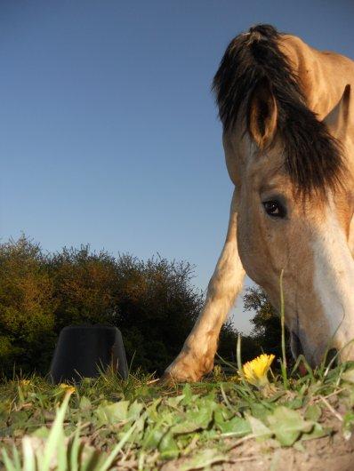 Mettez votre c½ur dans votre main et caressez votre cheval