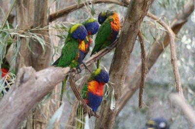 Un oiseaus tout simplement splendide :).