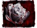 Photo de The-Dark-Rose-666