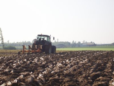 semis d escourgeon + labour