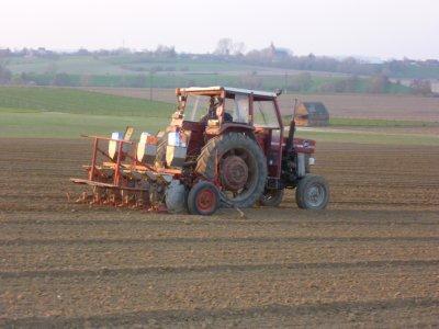 semis de betteraves