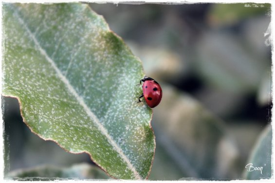 Article N°5 : Coccinelle !