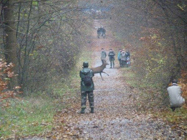 chasse du 21/11/2012
