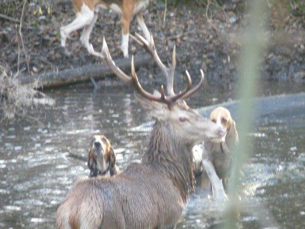chasse du 28/11/2012