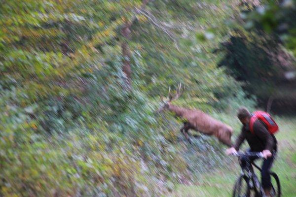 chasse du 15/10/2014 retraite manquée