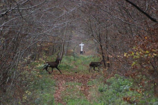 chasse du 14/11/2015 RETRAITE MANQUE