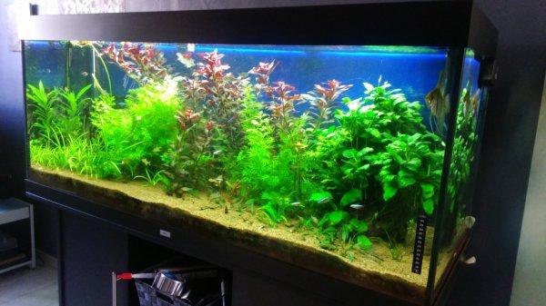 aquarium de 450 litre