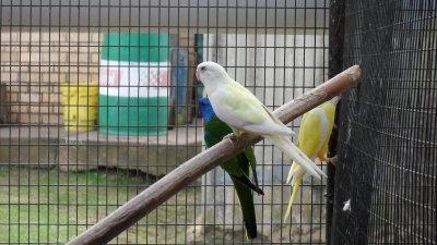 Some OF MY BIRDS