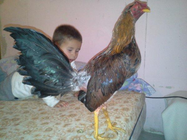 mon gallino un combat gagnie a marseille