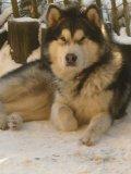 Photo de snowflakedog
