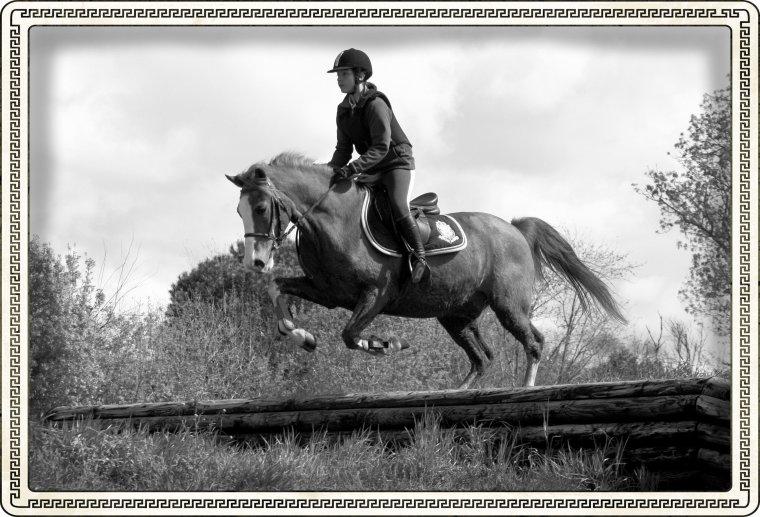 « L'air du paradis est celui qui souffle entre les oreilles d'un cheval.  » ♥