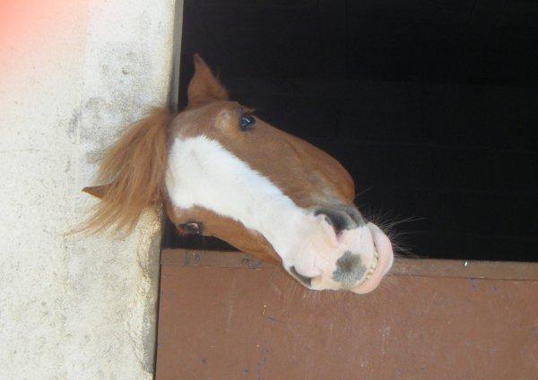 « Monter un cheval donne un goût de liberté.  »