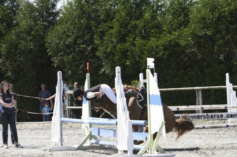 Bonjour je m'appelle Flamboyant et je suis un gentil petit poney :)
