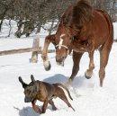 Photo de galop-equin-x3