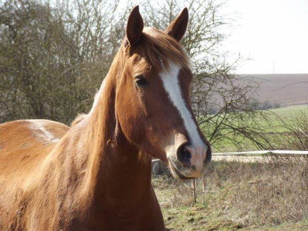Souvent décu par les etres humains, je me réfugie avecles chevaux ....