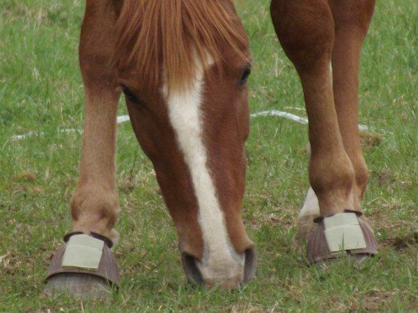 Mon petit cheval  je t'aime ....