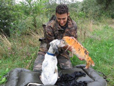 koi et chien