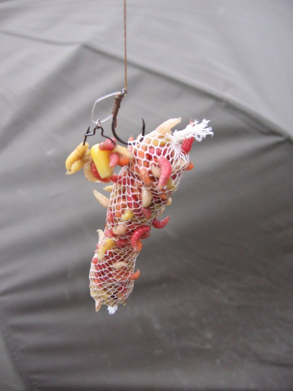 pêche au maggot clip