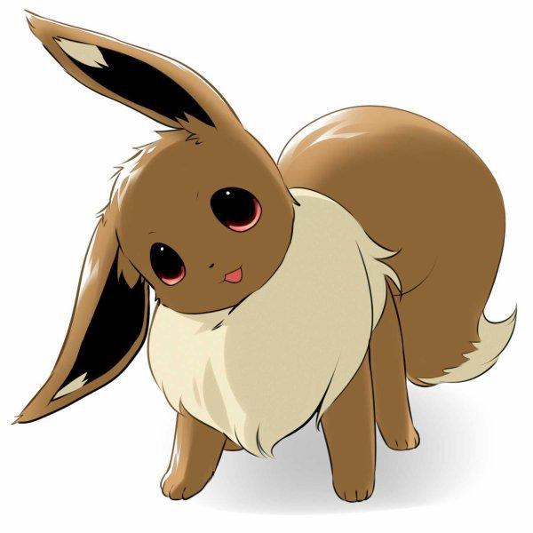 Evoli pok mon - Pokemon noir 2 evoli ...