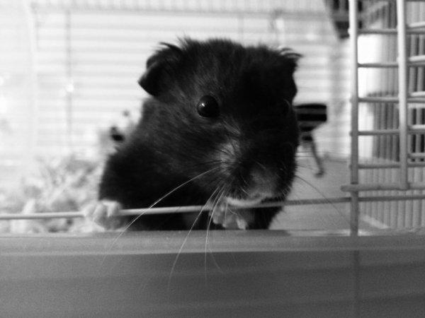ღ Mon Hamster ღ