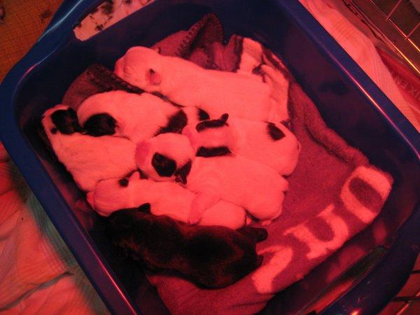 Les bébés sont nés !!!