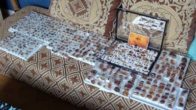 LOT 6 : 681 pièces d'ambre dominicain en boite ! 12 500 ¤