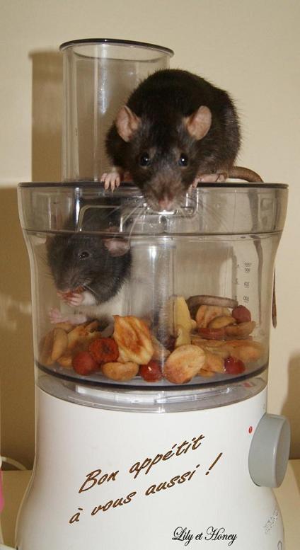 Gagnante Concours Mars 2012 : Les rata'touilles en cuisine