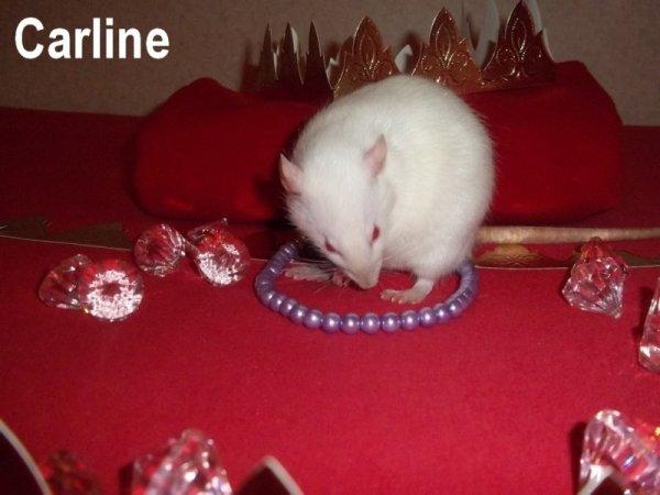 Gagnante Concours Janvier 2012 : Galette des rois