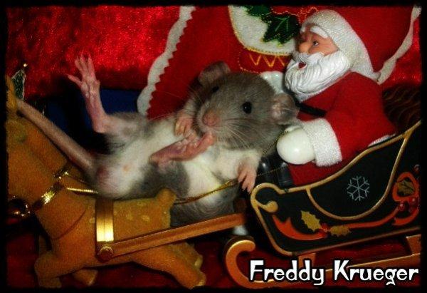 Gagnante Concours Decembre 2011 : Spécial Noël