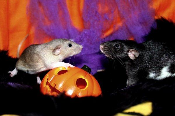 Gagnante Concours Octobre 2011 : Spécial Halloween
