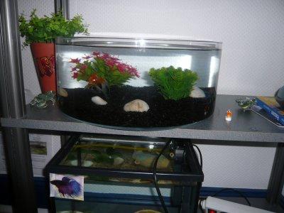 Mon aquarium de 20 litres les aquariums de ma chambre for Aquarium 40 litres poisson rouge