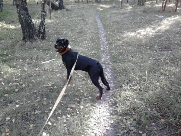 Walk with dog<3