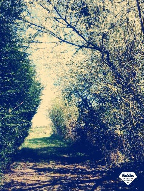 fleur blanche 3 (paysage3)