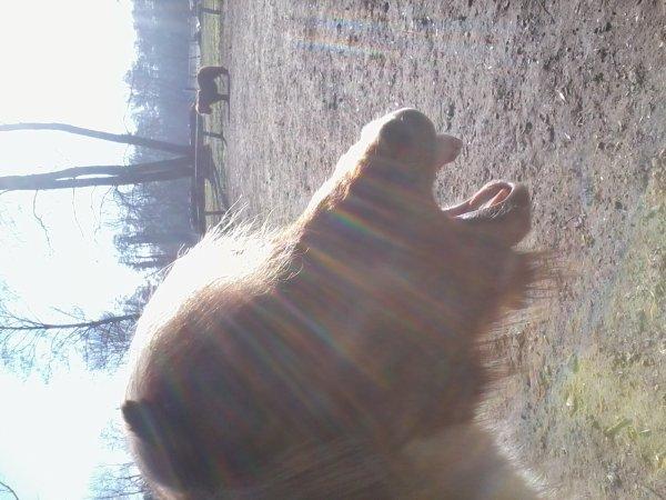 Cheyenne le Mardi 08/02/2011  et aussi la naissance d'une Brebis !!