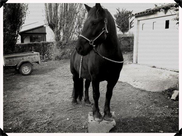 ~ Mon petit bout de cheval tu te rends pas compte a quelle point je t'aime~