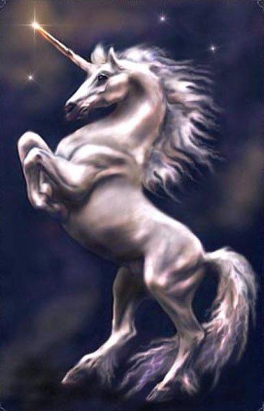 Animaux mythiques : La licorne sylvestre.