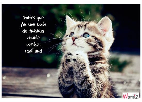 Remixe : Petits chatons.