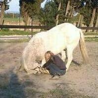 Images pour la présentation de mon blog :) mon poney Marius!