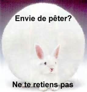 Si vous n'écoutez pas le lapin voilà ce qui va arriver