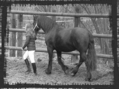 Une journée avec un cheval