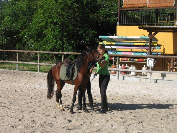 Débourrage cheval