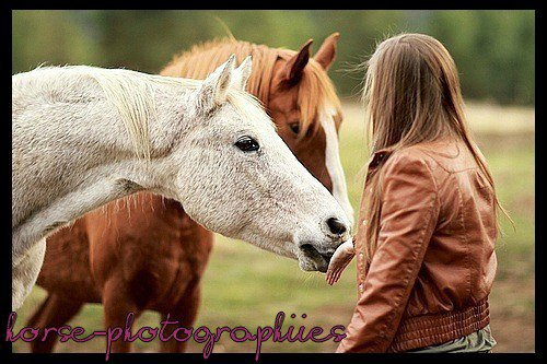 Horse-Photographie