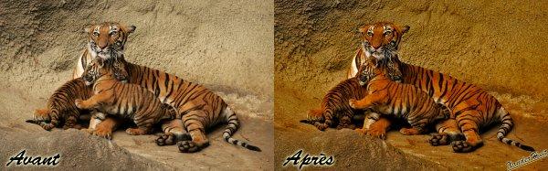Tutoriel Donner Un Effet HD A Une Photo Avec Photoshop CS6 Exended 