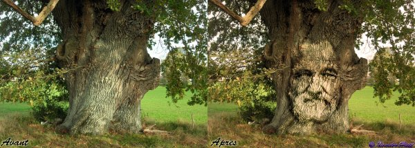 Tutoriel  Incruster Un Visage Dans Un Tronc D'Arbre Avec Photoshop CS6 Extended ​