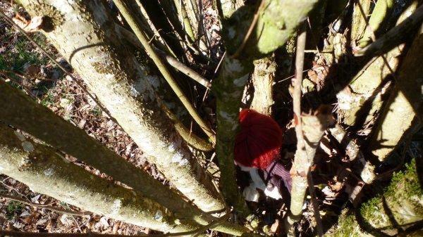 Dans les bois (3)