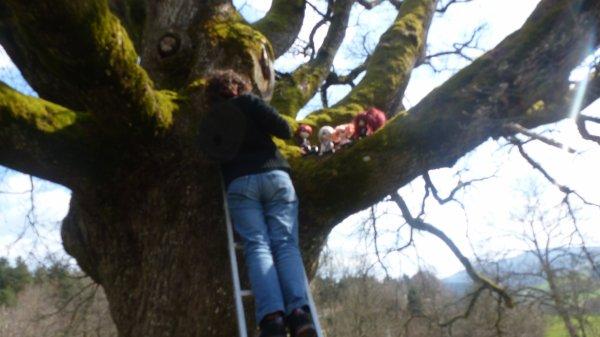 Dans l'arbre!