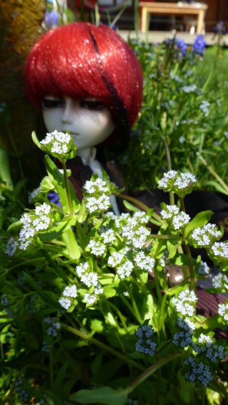 Fleurs (2)